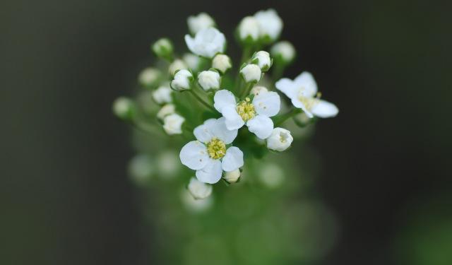 blommor19maj