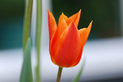 blommor27maj15 016